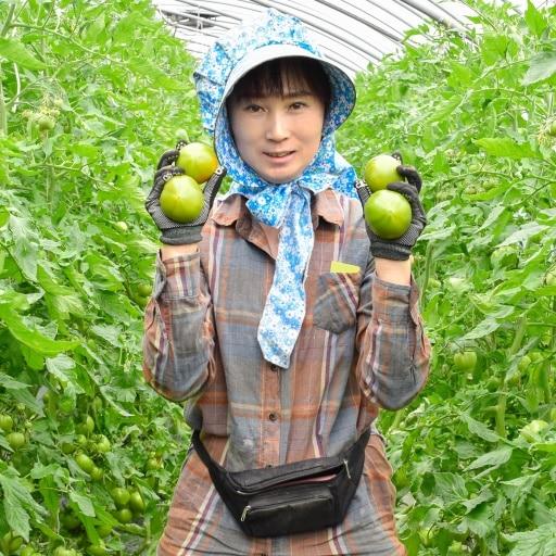 [특가할인] 단짠단짠 강동 토마토 2.5kg